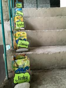 Seedlings on stair steps