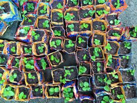 Little seedlings